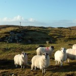 ENTERPRISING CROFTERS SHOWCASE THEIR GOODS